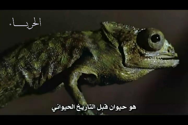 فلم الرعب الحرباء Las Garras de Loreley 1974 من ترجمتي ورفعي Lorele23